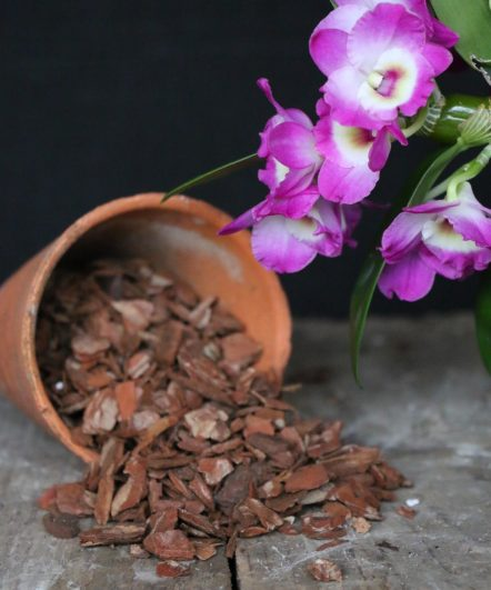Bark and compost mix for potting Dendrobium orchids from McBean's - world class orchid supplies.