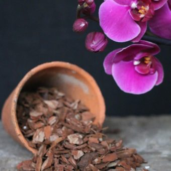 Bark for repotting Phalaenopsis orchids from McBean's - world class orchid supplies.