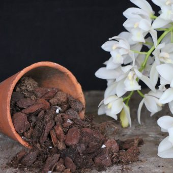 Orchid growing supplies from McBean's this bark mix is designed for Cymbidium orchids.