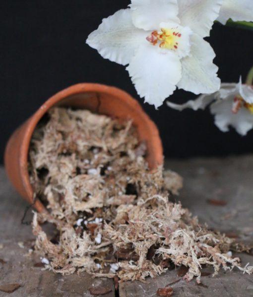 Sphagnum-Moss-Mix-6-litre-b